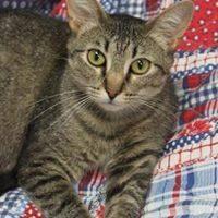 Adopt a Pet Shelter Cat Month