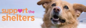 Bissell Support the Shelters Sweepstakes