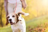 6/29 – Cantigny Park Dog Days