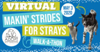 Virtual Makin' Strides for Strays on May 3rd, 2020